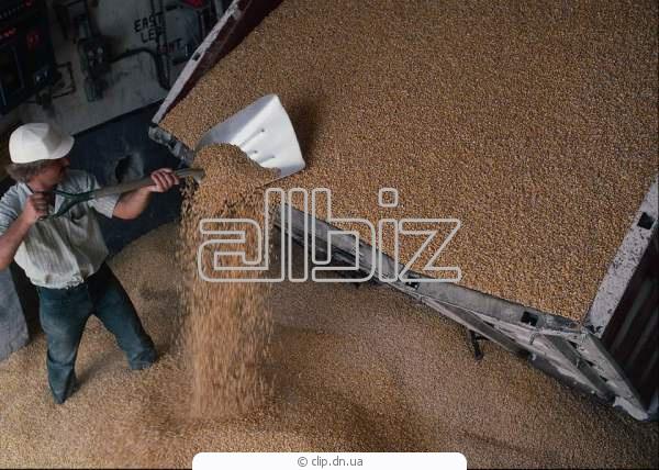 Купить Закупка зерновых и сырья