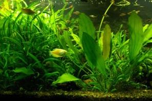 Купить Смешанный аквариум. Акватеррариум