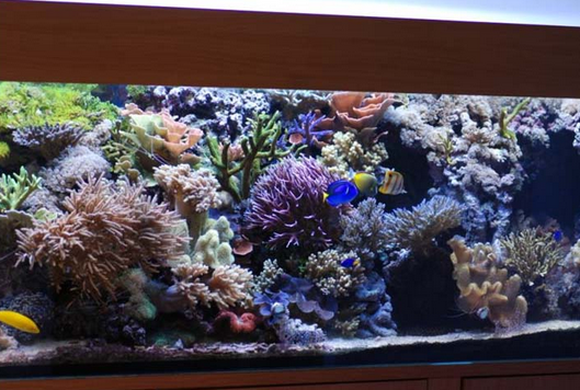 Купить Солоноводный аквариум