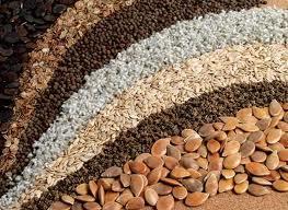 Купить Семена и посевной материал овощей, цветов, зерновых, трав