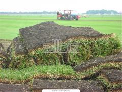 Газоны рулонные, травяные покрытия