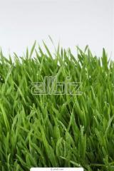 Семенные смеси для газонов
