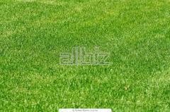Луговой газон, семена для газонов