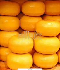 Твердый сыр голландского типа