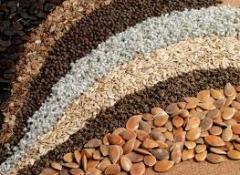 Семена и посевной материал овощей, цветов,