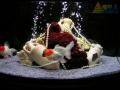 Рыбный аквариум