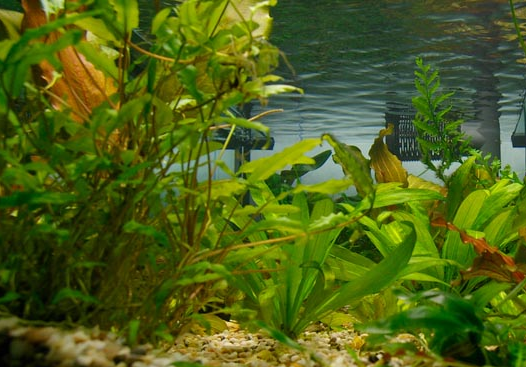 Заказать Проектирование аквариума