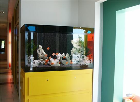 Заказать Оформление аквариумов