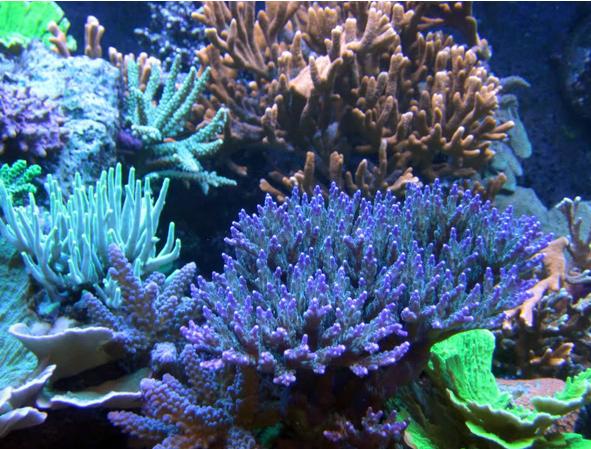 Заказать Перевозка аквариумов при переселении