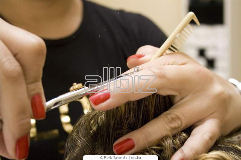 Заказать Услуги парикмахерские