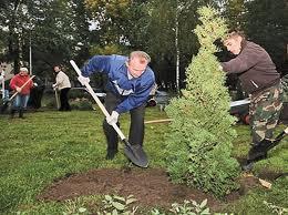 Заказать Посадка деревьев