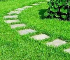 Разбивка газона