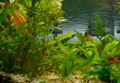 Проектирование аквариума