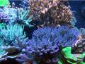 Перевозка аквариумов при переселении